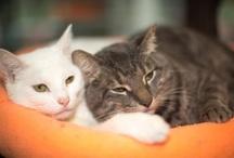Cat Rescue / by catsparella