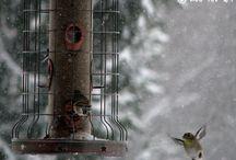 HE : Seasons - Winter projects / by Charlotte Delo