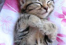 Kitties / by Susan Daw
