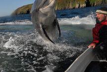 Dolphins / by Ognyan Tortorochev