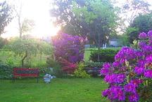 gardens / by Lucee Arvanitis-Santini
