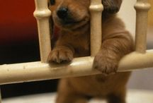Puppies / I am a animal lover.... / by Chrissy Farley