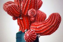Cactus cuties / by Linn Gaspar