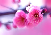 Lovely flowers / by Styleloverz