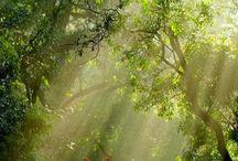 Natura.. / by Yolanda Serrano
