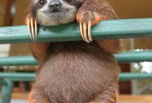 Sloth ain't no sin! / Nooooooo! How can sloth be a sin when it looks this cute?! / by Quirky Quaintrelle