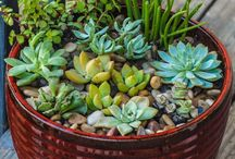 : Gardening : / by Suheiry Feliciano