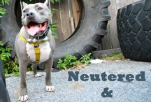 Neutered & Proud / Spayed & Fabulous / Join StubbyDog's NEUTERED & PROUD / SPAYED & FABULOUS Movement!! Enter photo contest: www.360photocontest.com/249 Learn more: http://stubbydog.org/stubbys-spayneuter-fund/ / by Stubby Dog