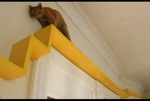 Cat trees, cat walks, cat stairs & cat shelves / Gathering ideas to make our house more catfriendly. / by Marieke Pins