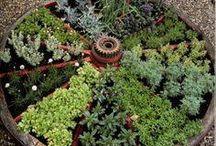 My garden / by Richard Conley