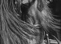 Equus / by Pam