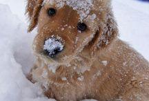 How cute... / by Susan Heilner Kaintz