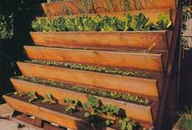 Gardening/Outdoors / by Wendy Ashcraft Walters