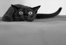 I like cats too ! / by Marti Bibeau