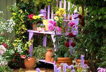 Darma's gardening idea's, and likes / by Amy Hollis-Burnham