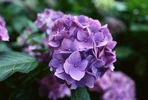 All things purple / by Charlotte Lovan