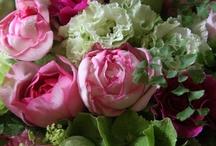 flowers / by minako masubuchi