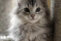 Hey, Cutie! / by Petcurean
