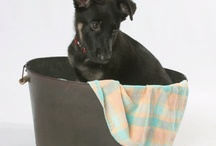 Pet Photography / by Brista Robinson