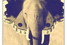 ELEPHANTS / by Teala Bates