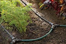 GARDEN watering / by Sandra Cassel