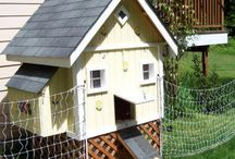Chickens!!! / I love chickens. I keep chickens, i have a chicken bathroom,need i say more? / by Lorna Leslie