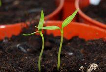 Gardening / by Jackie Matthews