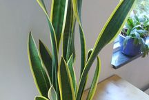 Indoor plants / by Courtney Blaisdell