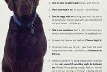 Dog Board / by Heather Sollid