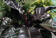 Black Plants / by Meg White