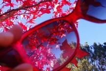 SEASONS - Autumn / For everything Autumnal / by Anorina @Samelia's Mum