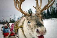 Animals / by Debbie Hammer