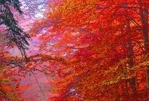 fall colors / by Rhonda Medford