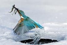 Fishing / by V-sharp