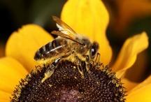 Bee's / by Brigitte Wurn-Christensen