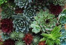 Plants / by Sarah Wynn