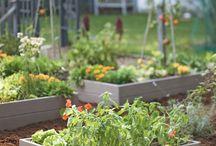 Gardening / by Beverly Casteel McCoy