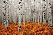 autumn inspiration / by Kat Mannix
