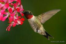 Birds / Birds / by Tammi Pinaholic