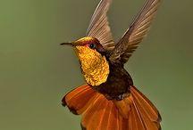 Birds / by Cassie Mitchell