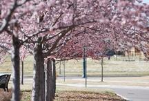 Spring Time! / by StapletonDenver