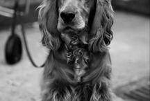 Dogs / by Danielle Everett