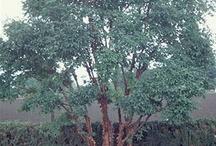 Specimen Trees / by Meg White