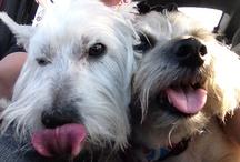 My Doggies & Dog Stuffs :) / by Scaryn Callahan
