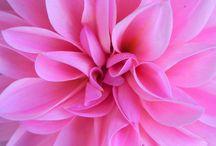 Pretty in Pink (Plus pink/orange) / by Cortney Little-Ash