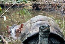 turtles / by Alecia Klinner