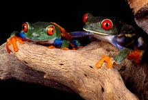 Love my frogs! / by Kimberly Neff