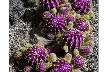 Cactus & Succulent Gardens / by Denise Greenberg
