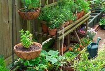 Gardening / by Kim Chastain