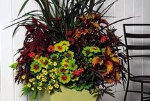 I love....container gardening / by Rhonda Loje